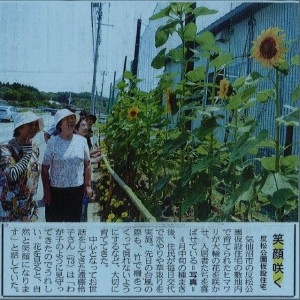 当団体の花プロジェクトの記事が三陸新報様に掲載されました