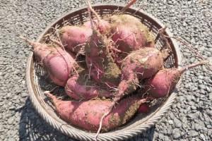 収穫祭@渡戸仮設住宅